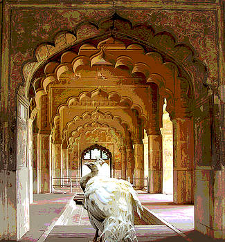 Posterized Peacock in Red Fort Palace by Aisha Abdelhamid