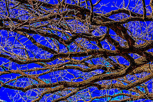 Posterized Tree Branches by Lonnie Paulson