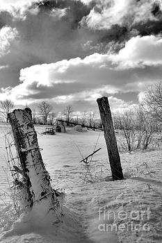 Posts in the Snow by Kristi Beers-Mason