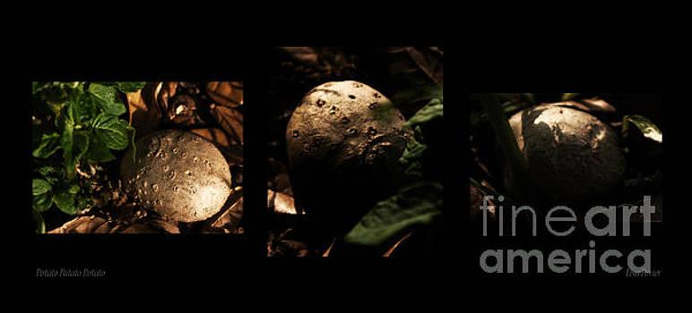 Potato Potato Potato by Lisa Holmgreen