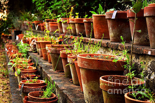 Pots in the Botanical Garden of Pisa, Italy by Tanya Searcy