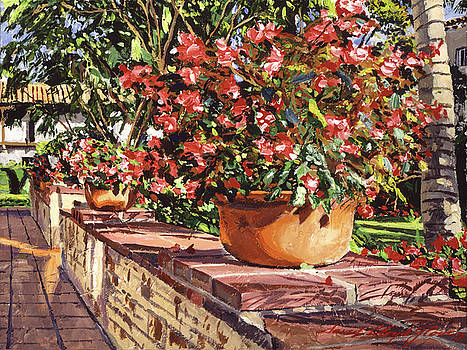 Potted Begonias Santa Barbara by David Lloyd Glover