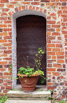 Sophie McAulay - Potted plant by old door