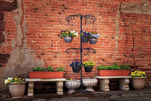 Potted Plants And A Brick Wall by James Eddy