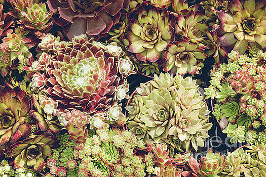 Sophie McAulay - Potted succulent collection