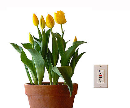 Stan  Magnan - potted TULIPS with duplex gfci power OUTLET
