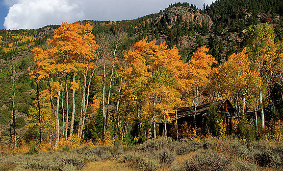 Poudre River Fall by Kenneth Eis