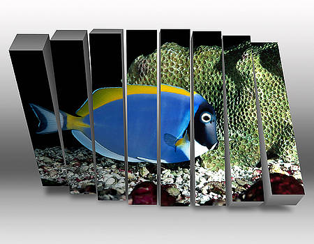 Powder Blue Tang by Marvin Blaine
