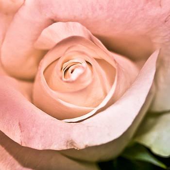 Powder Pink by Nora Blansett