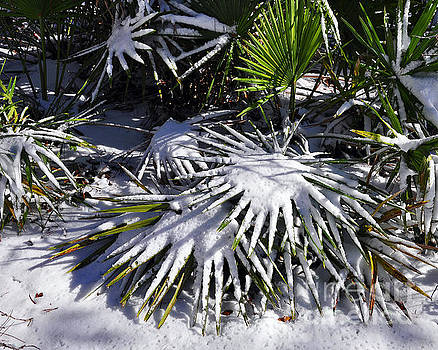 Powdered Palms by Al Powell Photography USA