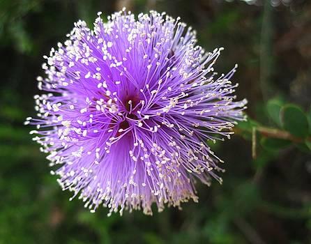 Purple Orb by Mary Ellen Frazee
