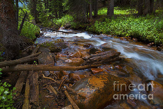Powerful Spring Runoff by Barbara Schultheis
