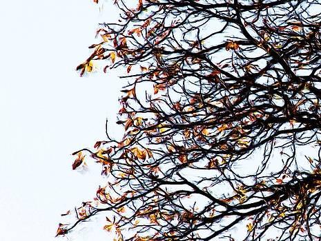 Praha Tangled Tree by Shawn Wallwork