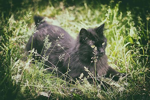 Prairie Cat by Scott Wyatt