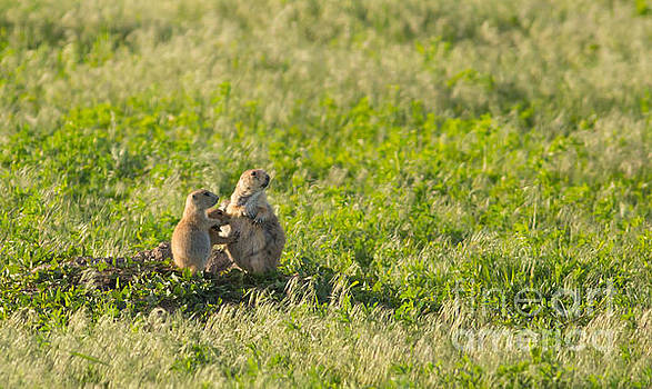 Prairie Dog Family Life by Natural Focal Point Photography