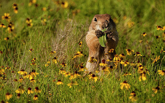 Prairie Dog in Flowers by Katherine Worley