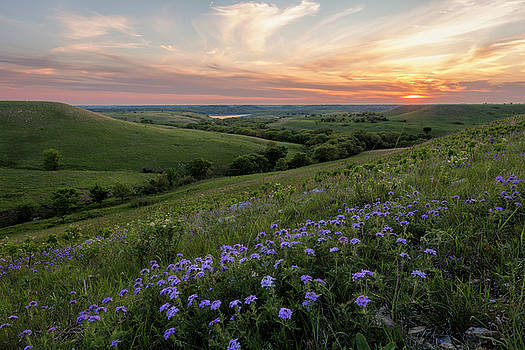 Prairie In Bloom by Scott Bean