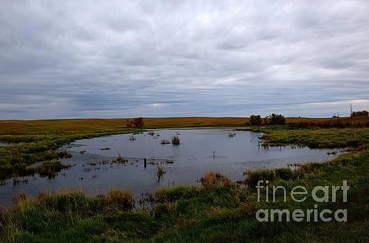 Rod Wiens - Prairie Pond