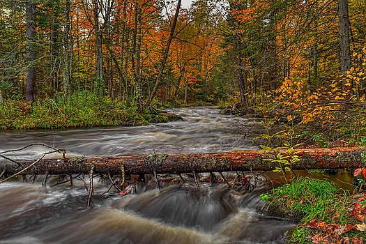 Dale Kauzlaric - Prairie River Tree Crossing