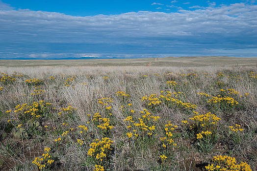 Prairie Wildflower and Sky Landscape by Cascade Colors