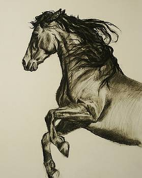 Prancing Horse by Veronica Coulston