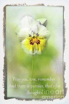 Pray you, love by Marilyn Cornwell