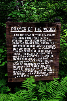 Michelle Calkins - Prayer of the Woods