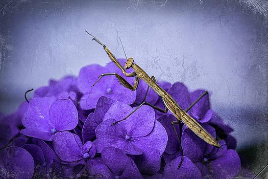 Praying Mantis by Jerri Moon Cantone
