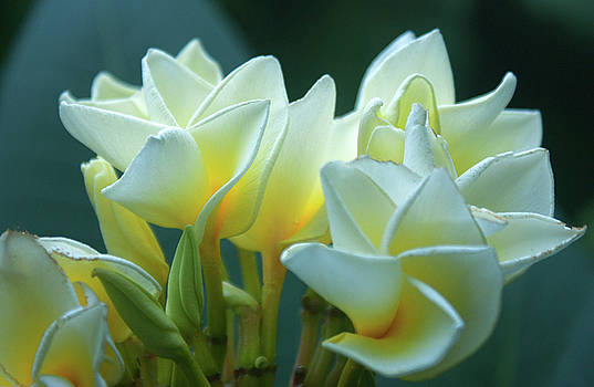 Precious Pinwheels by Maria Keady