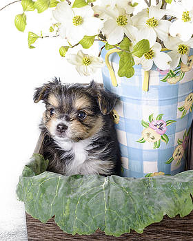 Precious Pup by Nena Pratt
