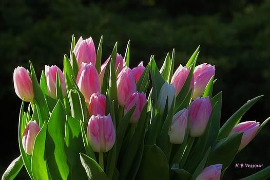 Precious Sunlight On Tulips by B Vesseur