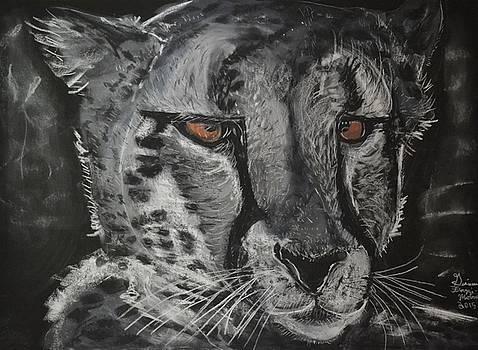 Predator's Gaze by Gianna Ferazzi-Mooney