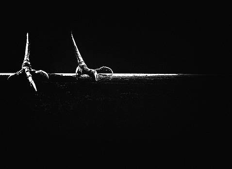 Predatory Feet  by Prakash Ghai