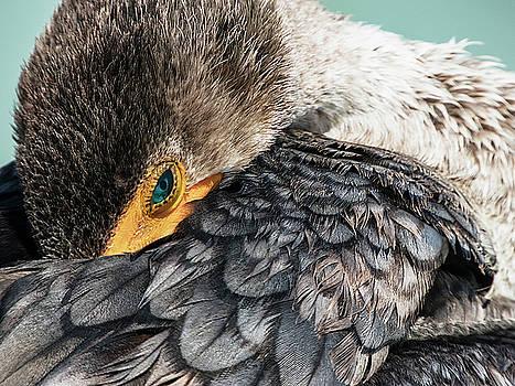 Preening Cormorant in Key West by Bob Slitzan