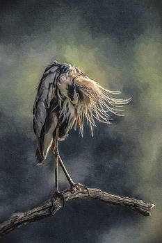Preening Great Blue Heron by Lauren Brice