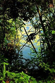 Pres du lac by Valerie Dauce