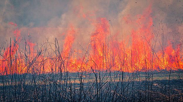 Steven Ralser - Prescribed Burn 3 - UW Arboretum - Madison - Wisconsin