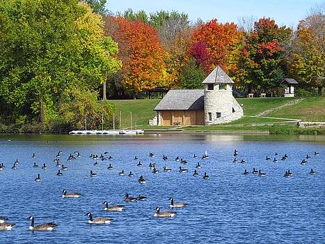 Pretty Autumn Afternoon  by Lori Frisch