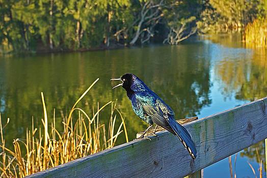 Pretty bird at a sunrise by Zalman Latzkovich