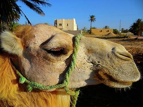 Pretty Camel by Exploramum Exploramum