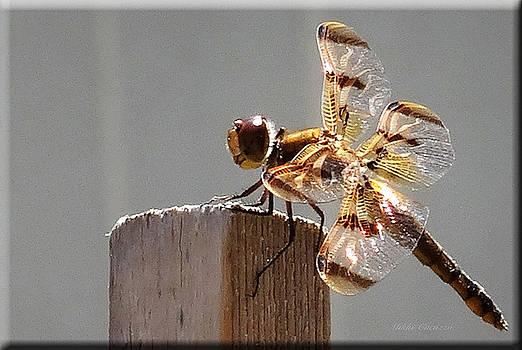 Pretty Dragonfly by Mikki Cucuzzo