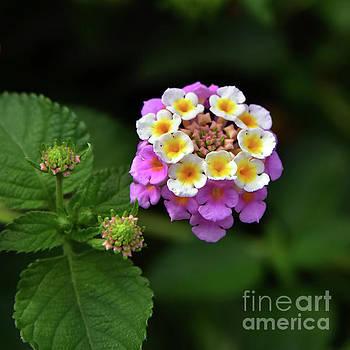 Svetlana Sewell - Pretty Flower