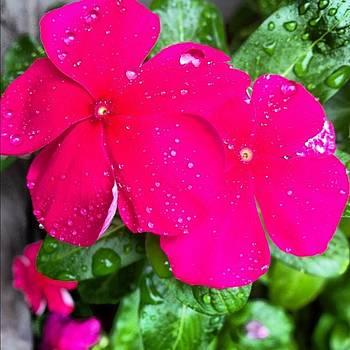 Pretty Flowers 🌺😊 #nofilter by Elizabeth Dominguez
