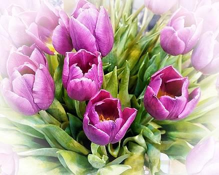 Pretty flowers - Tulips by Jeremy Hayden