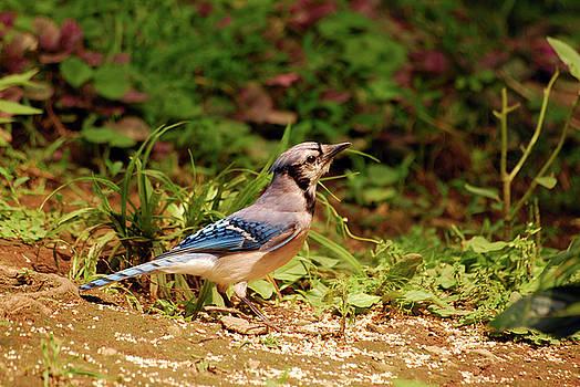 Pretty in Blue by Lori Tambakis