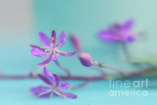 Pretty in pastel 4 by Priska Wettstein