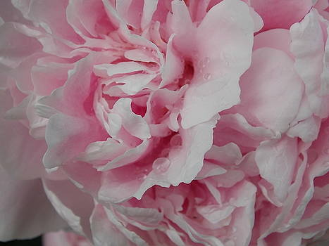 Pretty in Pink by Coleen Harty