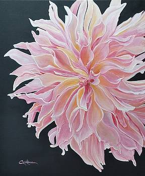 Pretty in Pink  by Connie Rowsell