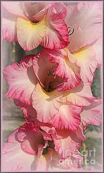 Pretty in Pink - Gladiola by Dora Sofia Caputo Photographic Design and Fine Art