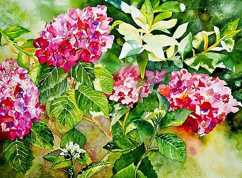 Pretty in Pink Hydrangea by Linda Broome